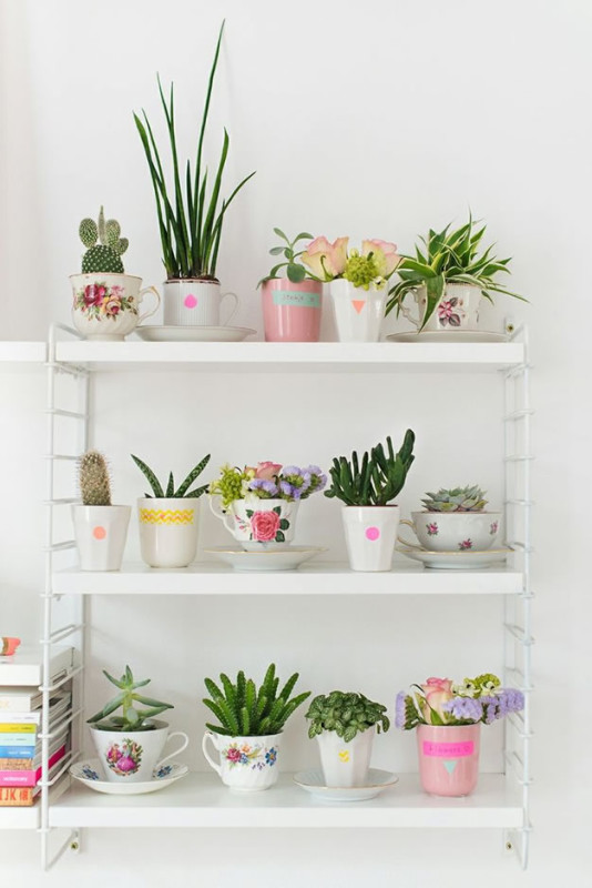 Decorar con cactus composiciones para decorar una estantería